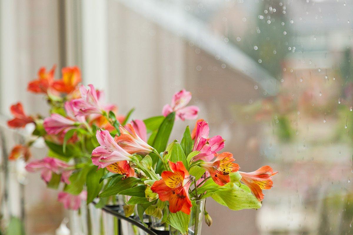 Cut flowers in windowsill