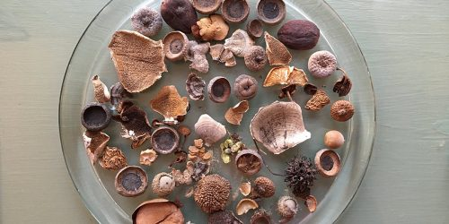 Acorns, seed heads, and other found objects from a walk